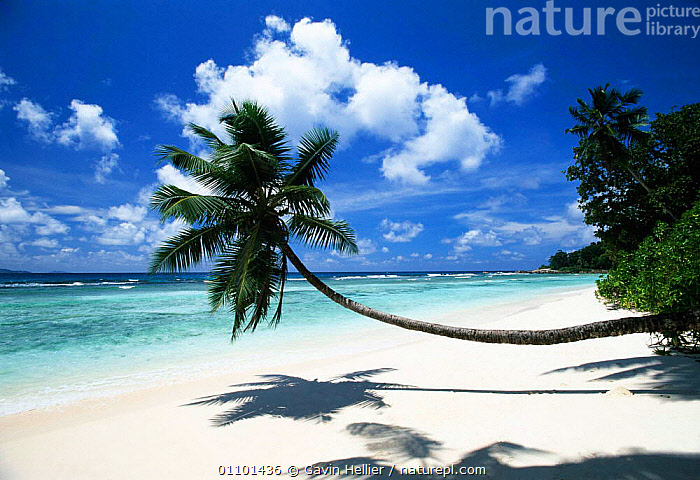 Anse Severe Beach and Palm tree, La Digue Island Seychelles, Indian Ocean  ,  BEACHES,CLOUDS,CONCEPTS,DESERTED,EMPTY,GHE,HOLIDAYS,HORIZONTAL,ISLAND,LANDSCAPES,PALM,PLANTS,SAND,SCENICS,SEA,SHADOW,SHORELINE,SKY,TRAVEL,TREE,TREES,TROPICAL,WEATHER,INDIAN OCEAN ISLANDS,Marine  ,  Gavin Hellier