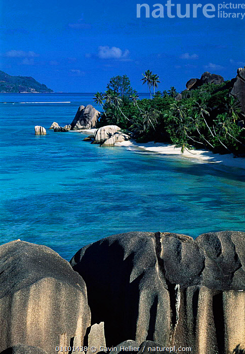 Anse Source d'Argent Beach, La Digue Island Seychelles, Indian Ocean  ,  BEACHES,BOULDERS,CONCEPTS,GHE,GRANITE,HOLIDAYS,LANDSCAPES,PALM,PALMS,PLANTS,ROCKS,SAND,SCENICS,SEA,SHORELINE,TRAVEL,TREE,TREES,TROPICAL,VERTICAL,WATER,INDIAN OCEAN ISLANDS  ,  Gavin Hellier