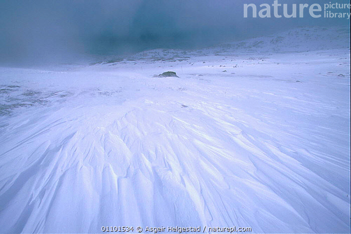 Winter storm with snow drifting. Norefjell mountains, Buskerud, Norway  ,  AHE,BAD,BLEAK,BLIZZARD,COLD,DRIFT,HELGESTAD,HORIZONTAL,LANDSCAPE,LANDSCAPES,MOUNTAINS,SCANDINAVIA,SCENIC,SCENICS,SNOW,STORM,WEATHER,WIND,WINTER,Europe, Scandinavia  ,  Asgeir Helgestad