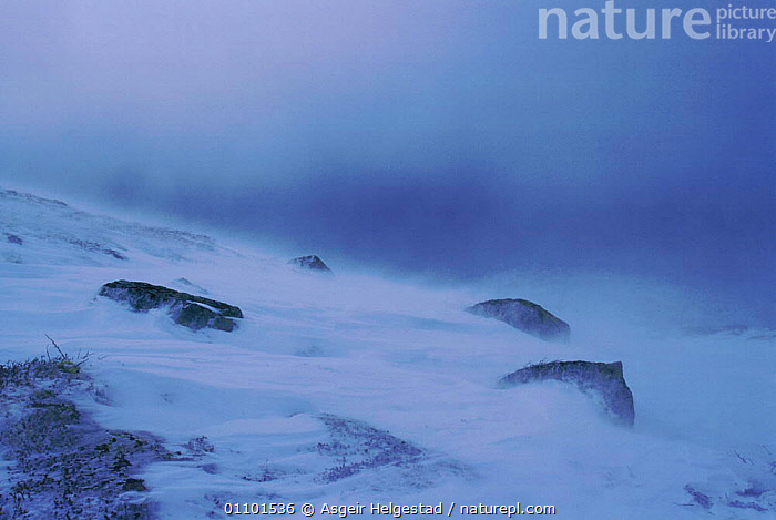 Winter storm with snow drifting. Norefjell mountains, Buskerud, Norway  ,  COLD,HORIZONTAL,LANDSCAPES,MOUNTAINS,SCANDINAVIA,WEATHER,WIND,WINTER,Europe, Scandinavia  ,  Asgeir Helgestad