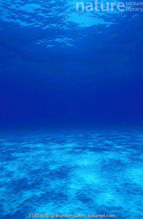 Shallow tropical waters with sandy seabed in The Bahamas, Caribbean. NOT FOR SALE IN US  ,  ABSTRACT,BCO,BED,BLUE,BOTTOM,EXOTIC,FLOOR,MARINE,NATURE,NORTH AMERICA,SAND,SANDY,SCENICS,SEA,SEABED,SEAFLOOR,SEASCAPES,TROPICAL,TROPICS,UNDERWATER,USA,VERTICAL,WATER,WATERS  ,  Brandon Cole