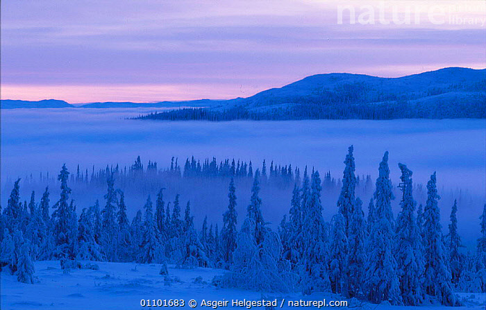 Winter landscape with snow and trees, Skirvedalen, Norway  ,  AHE,HORIZONTAL,LANDSCAPE,LANDSCAPES,SCANDINAVIA,SCENIC,SCENICS,SKIRVEDALEN,SNOW,WINTER,Europe, Scandinavia  ,  Asgeir Helgestad