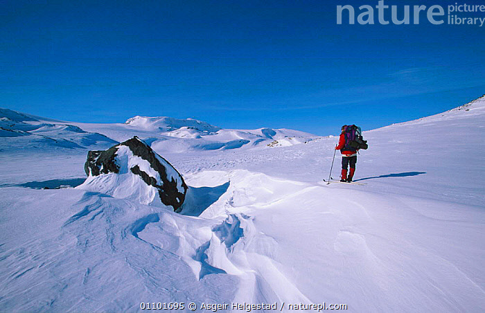 Cross country skier looking towards Hardangerjokulen glacier, Finse, Norway  ,  AHE,HORIZONTAL,LEISURE,PEOPLE,SCANDINAVIA,SKIING,SNOW,TOWARDS,TRAVEL,WINTER,Europe, Scandinavia  ,  Asgeir Helgestad