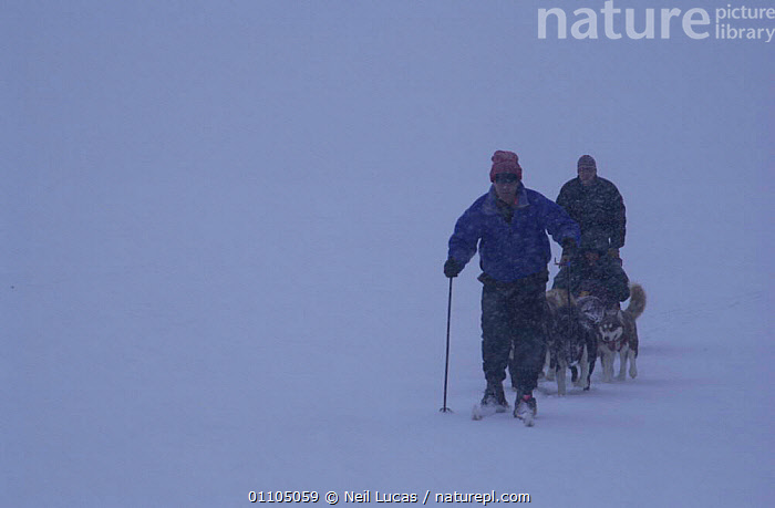 Sir David Attenborough riding on dog sled on location filming for 'Life of Mammals', 2002. Minnesota, USA  ,  COLD,FOG,HORIZONTAL,LOCATION,MISTY,NEIL,NHU,NL,OVERCAST,PEOPLE,SLEDGE,SNOW,USA,WEATHER,WINTER,NORTH AMERICA  ,  Neil Lucas