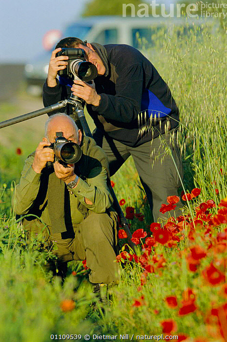 Wildlife photographers taking photos, CAMERA,FLOWERS,CAMERAS,POPPIES,PEOPLE,VERTICAL,CROPS,TWO, Dietmar Nill
