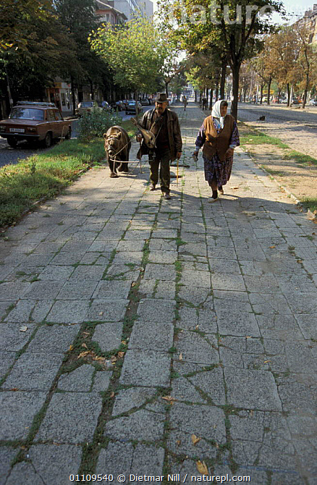 Captive Brown bear {Ursus arctos} led by handlers along street, Bulgaria, CITIES,CARNIVORES,EUROPE,ROADS,PEOPLE,BEARS,STREETS,THROUGH,LEAD,TRADITIONAL,CAPTIVITY,MAMMALS,CRUEL, Dietmar Nill
