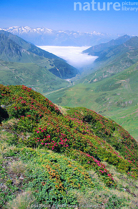 View from Col de Tourmalet with clouds lieing in valley below, Pyrenees, France, HIGHLANDS,SCENIC,VERTICAL,SCENICS,FLOWERS,LANDSCAPES,VALLEYS,MOUNTAINS,Europe, Mike Read