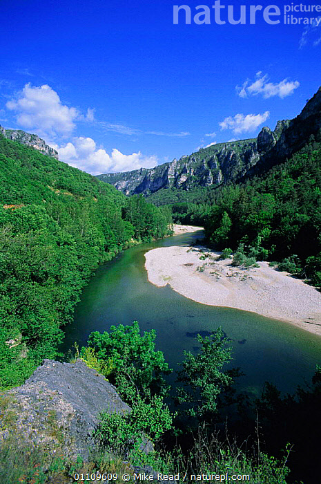 River Tarn in Gorges du Tarn, Lozere, France, LANDSCAPES,RIVERS,SCENICS,GORGE,SCENIC,VERTICAL,Europe, Mike Read