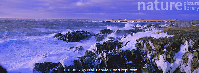 Ice covered coastal rocks in gale, Cape Bonavista, Newfoundland, Canada, WINTER,NORTH AMERICA,WEATHER,WIND,COLD,COASTS,INTERESTING,PANORAMIC,STORMS,SEA,WAVES,LANDSCAPES,STORM,CANADA, Niall Benvie