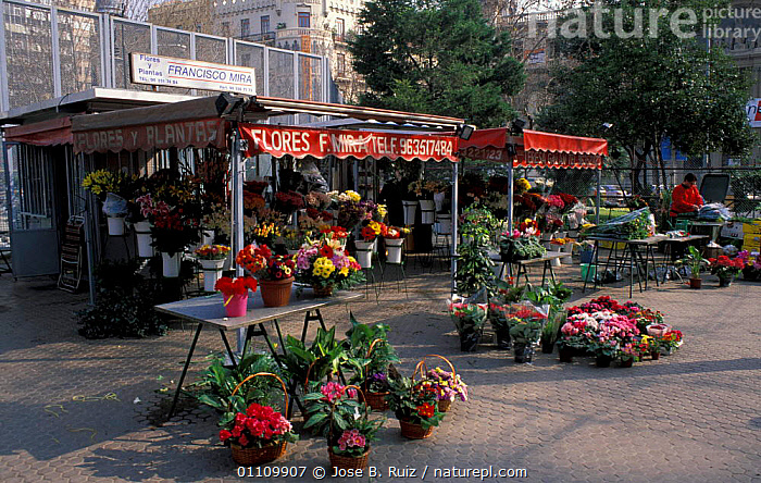 Flowers stall, Fallas Valencia festival, Valencia, Spain, CITIES,TRADE,LANDSCAPES,PLANTS,Europe, Jose B. Ruiz