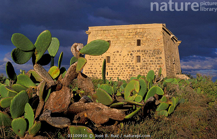 San Jose tower with storm clouds behind, Isla de Tabarca, Spain, BUILDINGS,CACTUS,STORMS,COASTS,FORTIFICATIONS,CACTI,LANDSCAPES,Weather,Plants,Europe, Jose B. Ruiz