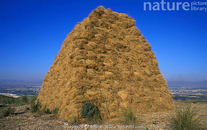 Haystack, Spain, LANDSCAPES,GRASS,CROPS,HAY,TRADITIONAL,Plants,Europe, Jose B. Ruiz
