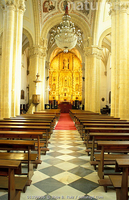 Interior of Baeza Cathedral, Jaen, Andalucia, Spain, CHURCH,RELIGIOUS,LANDSCAPES,RELIGION,BUILDINGS ,CHURCHES,Europe, Jose B. Ruiz
