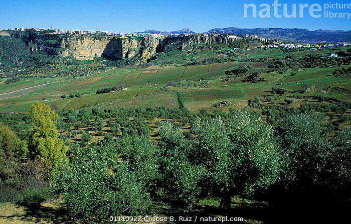 Cliff top village with valley below, Ronda, Andalucia, Spain, CLIFFS,MALAGA,VILLAGES,LANDSCAPES,BUILDINGS,Geology,Europe, Jose B. Ruiz