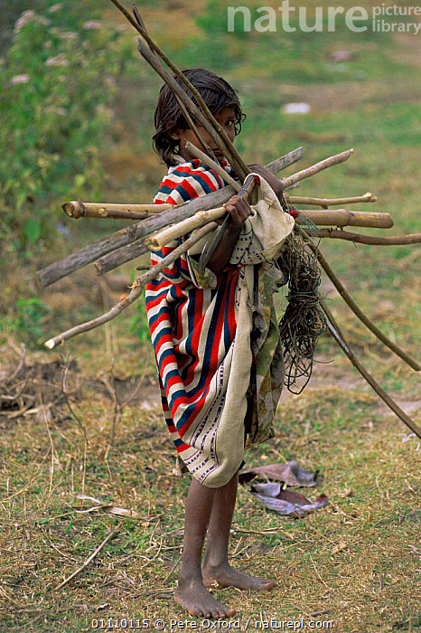 Young child brings wood back to village from forest, Assam, North East India, ASIA,BRANCHES,CHILD,CHILDREN,collection,firewood,FUEL,PEOPLE,VERTICAL,villagers,INDIA,INDIAN-SUBCONTINENT, Pete Oxford