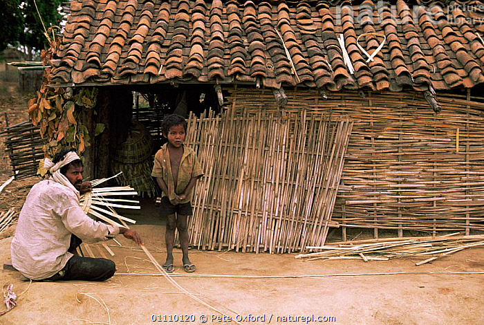 Basket makers, near Bandhavgarh NP, Central India., ASIA,BOY,CHILD,CHILDREN,CRAFTS,INDIAN SUBCONTINENT,MAN,NP,PEOPLE,TOURISM,TRADE,WORKING,National Park,SCOTLAND,INDIAN-SUBCONTINENT, Pete Oxford