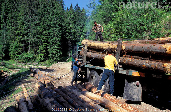 Loading logs onto truck, timber industry, Transylvania, Romania, PEOPLE,VEHICLES,TRADITIONAL,TRANSYLVANNIA,DEFORESTATION,FORESTRY,TREES,LANDSCAPES,LOGGING,PLANTS,EUROPE, Justine Evans