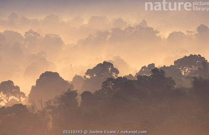 Khao Yai NP at dawn, tropical rainforest, Thailand, TROPICAL RAINFOREST,SUNRISE,RESERVE,HORIZONTAL,LANDSCAPES,MIST,ASIA,SOUTH-EAST-ASIA, Justine Evans