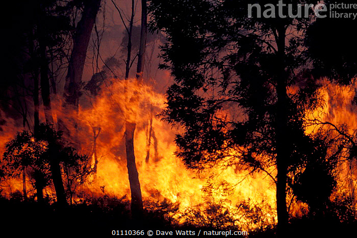 Bush fire, Tasmania, Australia, FLAMES,HEAT,BUSHFIRE,WOODLANDS,LANDSCAPES ,AUSTRALIA,Catalogue1, Dave Watts