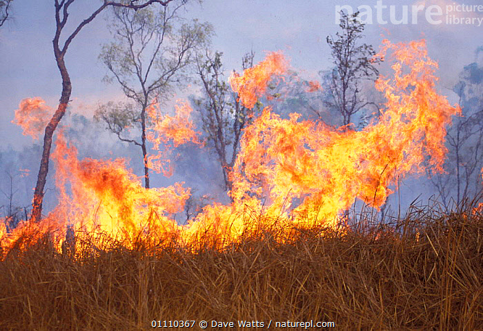 Bush fire, Northern Territory, Australia, LANDSCAPES,FIRES,FLAMES, Dave Watts