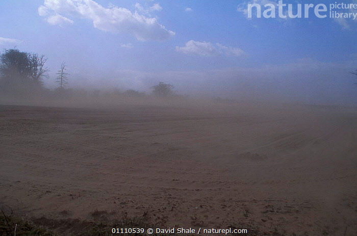 Dust storm, wind erosion due to over cultivation. Norfolk, UK, FARMLAND,LANDSCAPES,EUROPE,SOIL EROSION,AGRICULTURE,CULTIVATION,STORMS,Weather,ENGLAND, David Shale