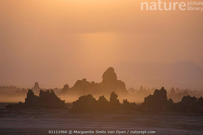 Mineral chimneys of Lac Abbe, Djibouti, East Africa. Formed in lake, now exposed on plain.  ,  LANDSCAPES,AFRICA,EAST AFRICA,LAKES,MINERALS,MIST,PLAIN,ROCK FORMATIONS,GEOLOGY,EAST-AFRICA  ,  Marguerite Smits Van Oyen