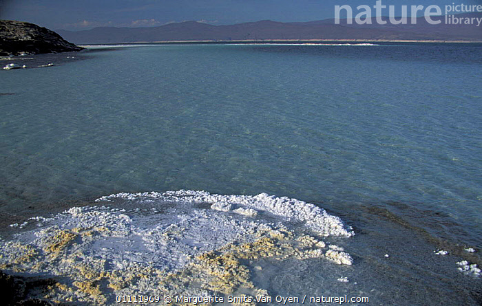 Lac Assal, crystallised salt on shoreline, 150m below sea level. Djibouti, East Africa sea water  ,  LANDSCAPES,LAKES,LEVEL,MINERALS,MINERAL,HORIZONTAL,CRYSTALS,EAST-AFRICA,Africa  ,  Marguerite Smits Van Oyen