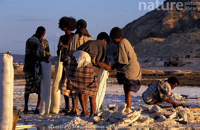 Afar tribesmen mining salt, Lac Assal, Djibouti, East Africa. 150m below sea level. sea water  ,  PEOPLE,TRIBES,TRADITIONAL,HORIZONTAL,LEVEL,MINERALS,LANDSCAPES,EAST-AFRICA,Africa  ,  Marguerite Smits Van Oyen