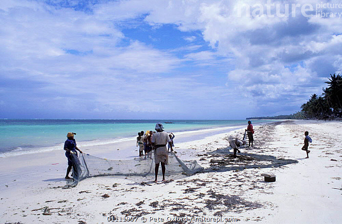 Women checking seine net for fishing, Bwejee village, Zanzibar, Tanzania  ,  AFRICA,BEACHES,BEACHES,COASTS,FISHERIES,FISHERMAN,LANDSCAPE,LANDSCAPES,NETS,PEOPLE,TRADITIONAL,WORKING,EAST-AFRICA  ,  Pete Oxford