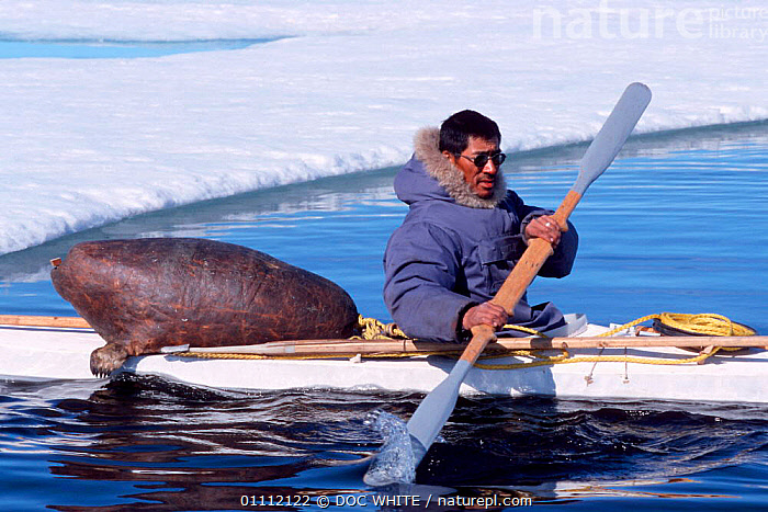 Inuit hunter in kayak with sealskin float and harpoons in front of ice floe, Canadian Arctic  ,  BOATS,CULTURES,DWH,ESKIMO,ICE,INUIT,KAYAKS,MALES,MAN,NORTH AMERICA,PEOPLE,TRADITIONAL,WATER  ,  DOC WHITE