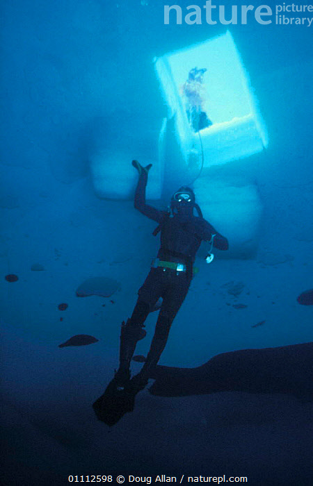 Diver under access hole that has been cut in the sea ice, Antarctica 1987  ,  COLD,PEOPLE,PERSON,UNDERWATER  ,  Doug Allan