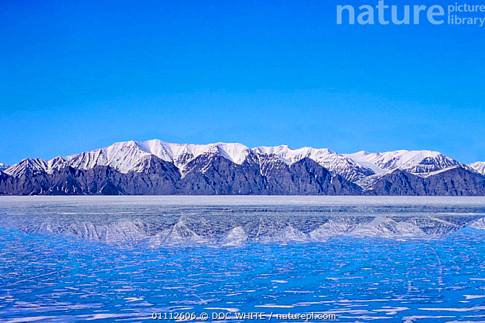 Ice floes and mountains, northern Baffin Island, Canadian Arctic  ,  DWH,ISLAND,LANDSCAPES,MOUNTAINS,NORTH AMERICA,NORTHERN,REFLECTIONS,SEA,SNOW,WATER,WHITE  ,  DOC WHITE