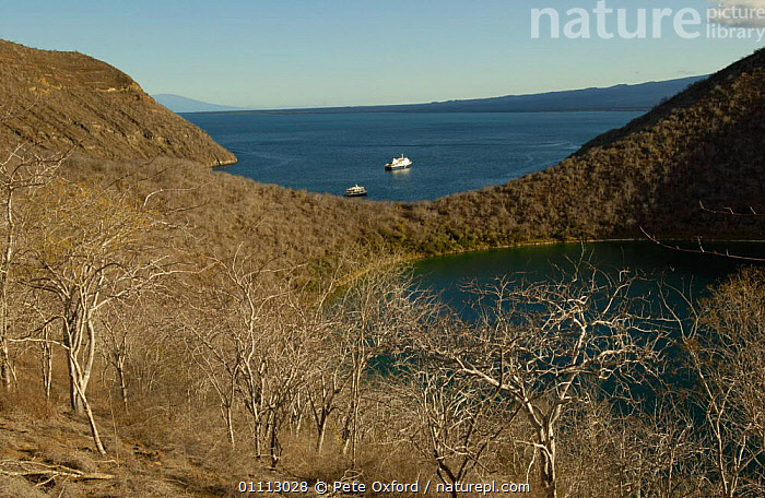 Darwin Bay, Tagus Cove, Isabela Island, Galapagos Is.  ,  COASTS,LANDCAPES,SOUTH AMERICA,SOUTH-AMERICA  ,  Pete Oxford