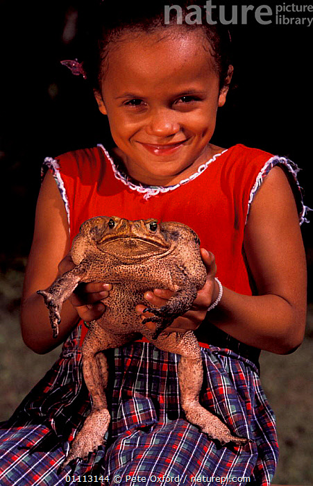 Roccoco toad {Bufo paracnemis} held by child. Cerrado, Brazil  ,  AMPHIBIAN,AMPHIBIANS,CHILD,GIRL,HUGE,LARGE,PEOPLE,SIZE,SOUTH AMERICA,TOADS,ANURA  ,  Pete Oxford