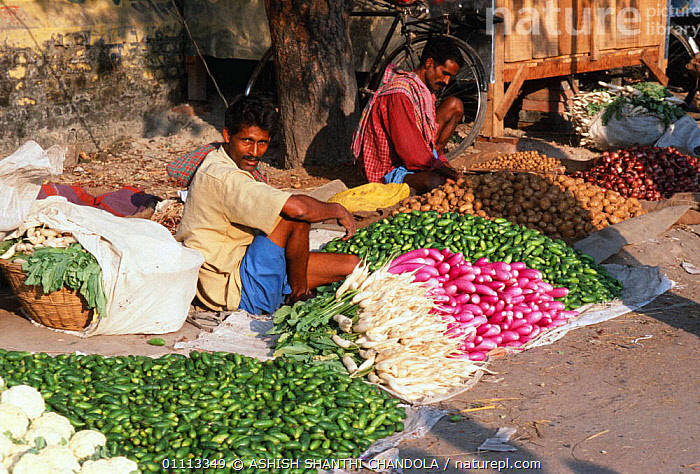 Vegetables for sale at Sonepur fair, Bihar, India  ,  STALL,MARKET,PEOPLE,ASIA,TRADE,FOOD,LANDSCAPES,CITIES,COLOURFUL,PLANTS,ARTIODACTYLA,INDIAN SUBCONTINENT,INDIA,INDIAN-SUBCONTINENT  ,  ASHISH SHANTHI CHANDOLA