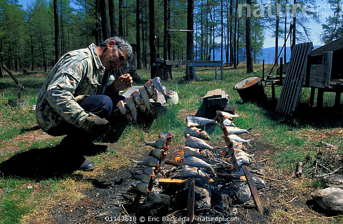 Man cooking fish over fire, Lake Baikal, Siberia, Russia  ,  CAMPFIRE,FISHERMAN,FISHING,FOOD,LANDSCAPE,LANDSCAPES,PEOPLE,SUMMER ,RUSSIA,CIS  ,  Eric Baccega