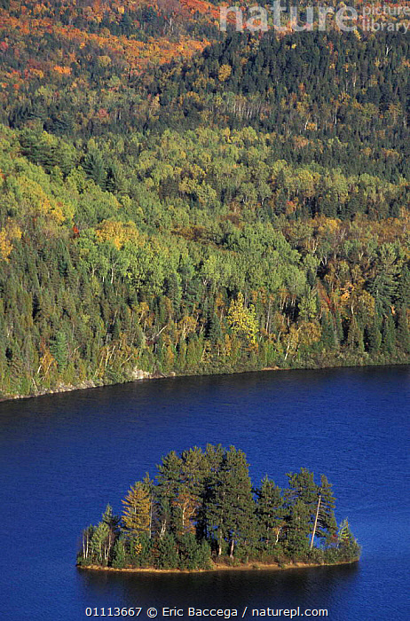 Aerial view of island in lake and mixed woodland, Quebec, Canada  ,  AUTUMN,LANDSCAPES,NORTH AMERICA,AERIAL,NORTH AMERICA,LAKES,LANDSCAPE,WOODLANDS ,CANADA ,AERIALS  ,  Eric Baccega