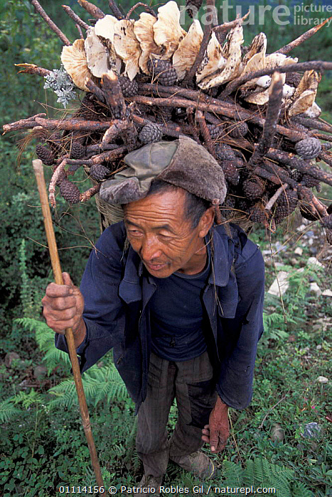Man carrying wood, fir cones and wild mushrooms, Yunnan province, China, 2002  ,  LANDSCAPES,ASIA,PEOPLE,TRADITIONAL,CHINA  ,  Patricio Robles Gil