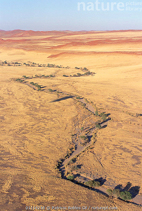Dried river course in Namib desert, Namibia  ,  RIVERS,DESERTS,SOUTHERN AFRICA,SAND DUNES,LANDSCAPES,DRY SEASON  ,  Patricio Robles Gil