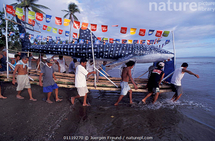 Villagers carry bamboo whale shark down to the sea, Donsol, Philippines  ,  FISH,COASTS,LANDSCAPES,PEOPLE,TRADITIONAL,ASIA,FESTIVAL,SOUTH-EAST-ASIA  ,  Jurgen Freund