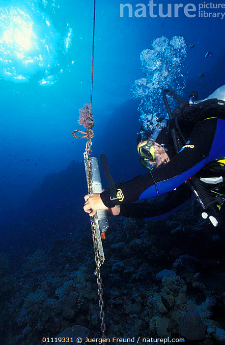 Receiver records pings of reef sharks with implanted transponders, Great Barrier Reef, MARINE,FISH,CORAL,RECORD,AUSTRALIA,TROPICAL,INDO PACIFIC,BAIT,RESEARCH,UNDERWATER,SEA,Sharks, Fish, Jurgen Freund