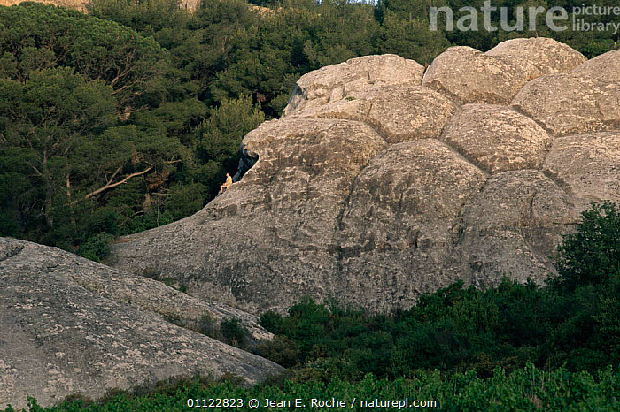 Person sitting by rocks showing hexagonal crystallisation of sandstone, Toulon, Provence, France  ,  EUROPE,FRANCE,GEOLOGY,PATTERNS,PEOPLE,ROCK FORMATIONS  ,  Jean E. Roche