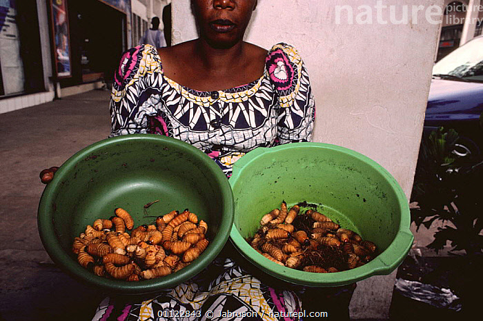 Beetle larvae for sale, Brazzaville, Democratic Republic of Congo  ,  AFRICA,CENTRAL AFRICA,COLEOPTERA,CULTURES,EDIBLE,FOOD,GROUPS,INSECTS,LARGE,LARVAE,MARKETS,PEOPLE,SIZE,TRADITIONAL,WEST AFRICA,Invertebrates , Bruce Davidson  ,  Jabruson