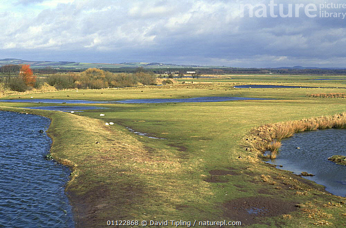 Caerlaverock WWT reserve, Solway, Dumfries & Galloway, Scotland, UK  ,  EUROPE,LANDSCAPES,RESERVE,SCOTLAND,UK,WETLANDS,United Kingdom,British  ,  David Tipling