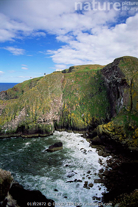 Coastal landscape, St Abb's head NNR, Borders, Scotland, UK.  ,  COASTS,EUROPE,LANDSCAPES,CLIFFS,RESERVE,UK,United Kingdom,Geology,British,SCOTLAND, United Kingdom, United Kingdom, United Kingdom  ,  DAVID TIPLING