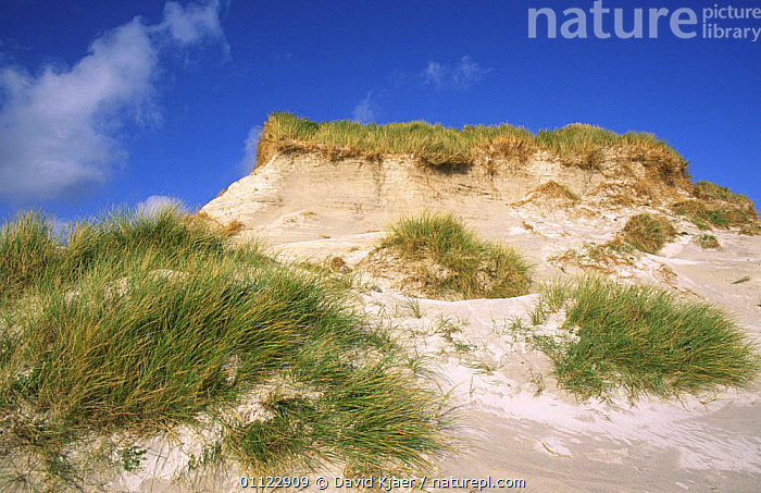 Sand dunes, Eilean na Rubha, North Uist, Outer Hebrides, Scotland, UK  ,  COASTS,COLONISATION,DUNES,EUROPE,GRASS,HABITAT,LANDSCAPES,MARRAM,SAND,SAND DUNES,SCOTLAND,UK,United Kingdom,Deserts,Plants,British  ,  David Kjaer