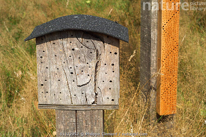 Artificial nest site for bumble bee {Chelostoma campanularum} Belgium  ,  NESTS,INSECTS,HYMENOPTERA,CONSERVATION,EUROPE,INVERTEBRATES  ,  Philippe Clement