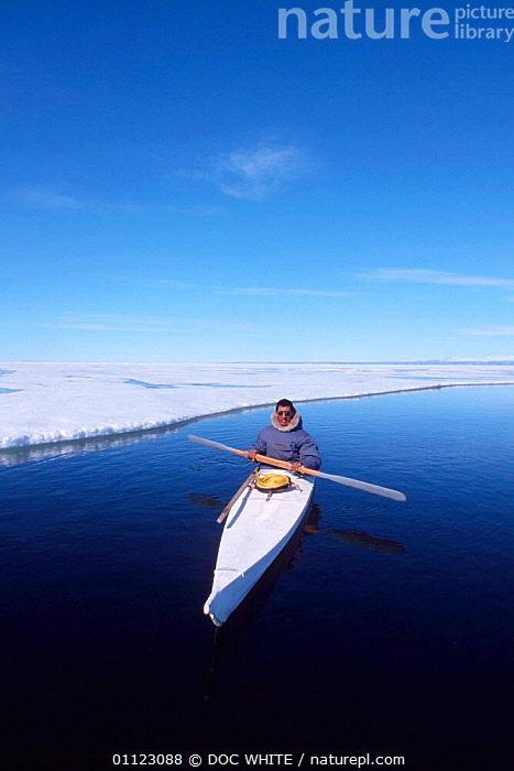 Inuit hunter in kayak Canadian arctic Canada  ,  TRIBES,BOATS,CANADA,HUNTING FOOD,NORTH AMERICA,PEOPLE,SNOW,ICE,VERTICAL,TRADITIONAL,LANDSCAPES  ,  DOC WHITE