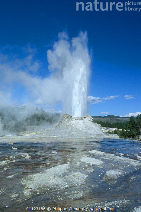Castle geyser spouting, Old Faithful area, Yellowstone National Park, Wyoming, USA  ,  ACTION,GEOTHERMAL,GEYSERS,LANDSCAPES,NORTH AMERICA,NP,RESERVE,VERTICAL,Geology,National Park,USA  ,  Philippe Clement