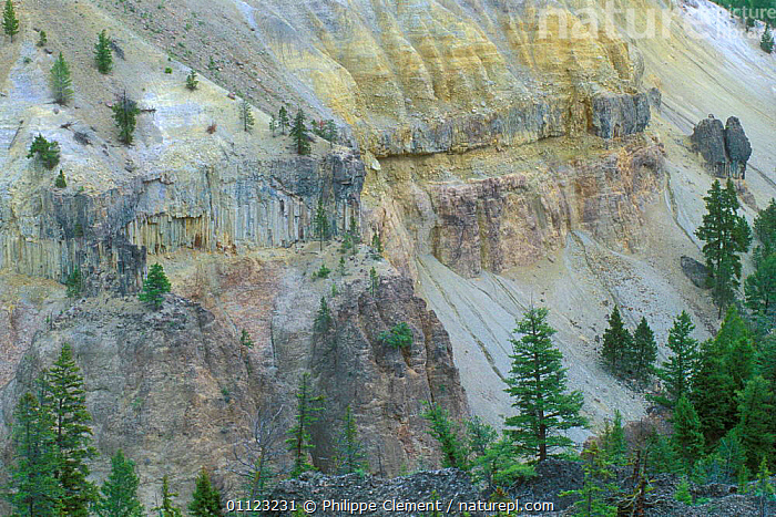 Basalt columns at Tower, Yellowstone National Park, Wyoming, USA  ,  GEOLOGY,LANDSCAPES,LAVA,NORTH AMERICA,NP,ROCK FORMATIONS,National Park,USA  ,  Philippe Clement